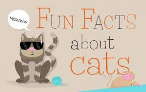 Their are many interesting facts about cats that explain a great deal about their actions. Cats are very mysterious but their is a method behind their madness if you will.