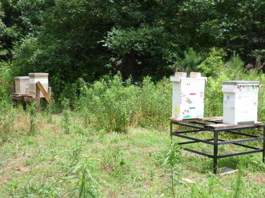 Two small honey bee hives, two bigger hives in the background.