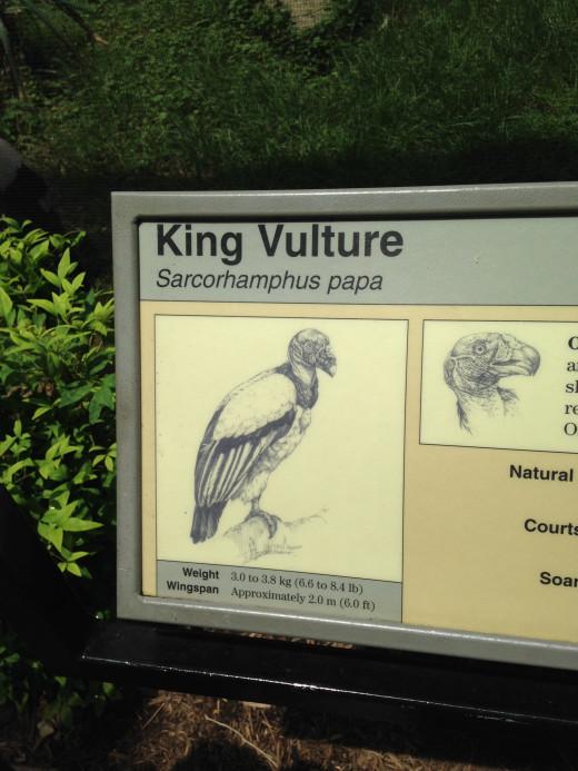 KING VULTURE BILLING