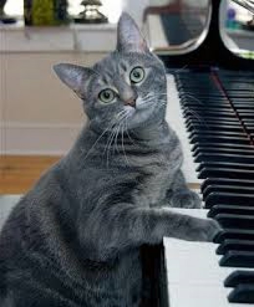 Nora, the Piano Cat.