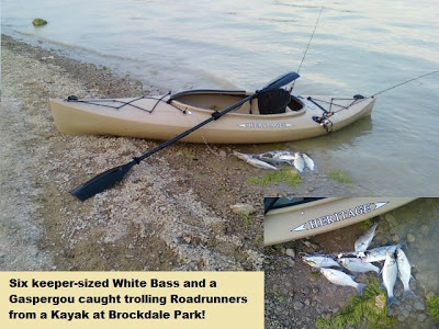 Another batch of fish caught Kayak Trolling!
