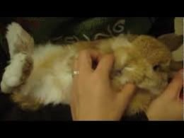 the chin massage