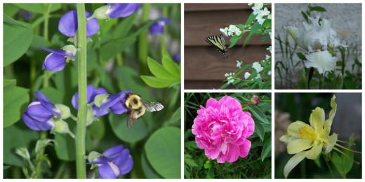 Flowers the Butterflies Love