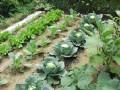 Fall Vegetable Garden: Organic Produce For Winter