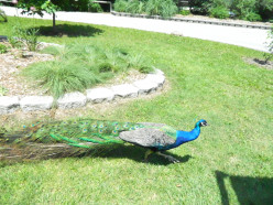 A Layman's Guide To: Dickerson Park Zoo in Springfield, Missouri