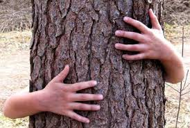 Hugging the trees gives relief from your sorrows!
