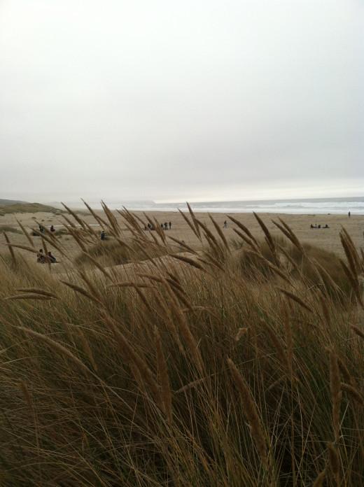 The coastal climate
