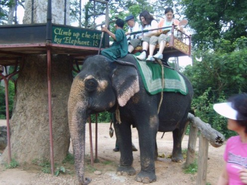 If you don't want to walk at Angkor, you can pay to get elephants to carry you.