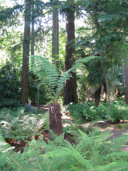 One of the ferns in the fern dell