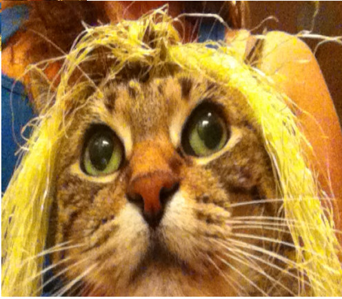 My Cat Tigerlily and Her Cornsilk Hair