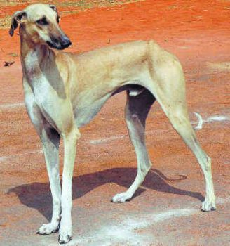 Low Price Dog Breeds In Chennai