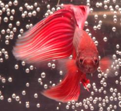 Photographing Your Aquarium