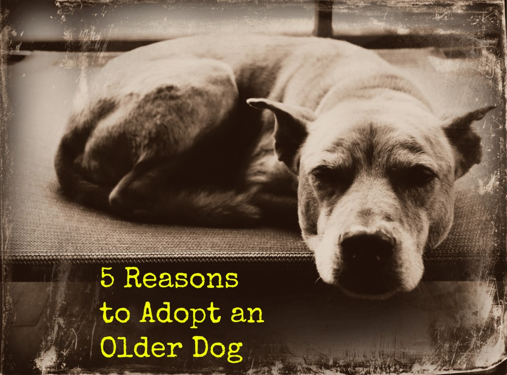 Adopting An Older Dog