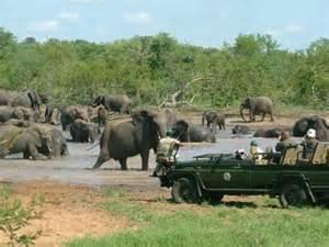 Herd of Elephants in Kruger