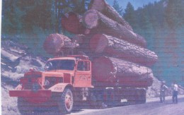 Logging contributes  to the loss of forests