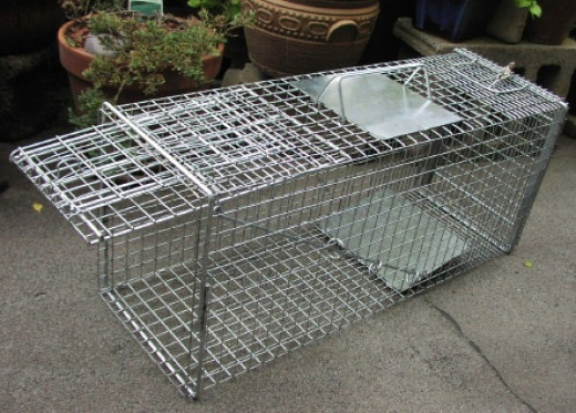 This is the type of trap Daisy was found in