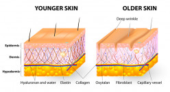What Are Phytoceramides and How Can you Make Your Skin Look Younger?