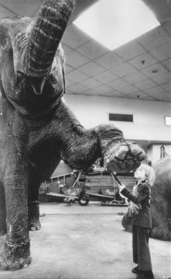 Wild Animals in the Circus Laws