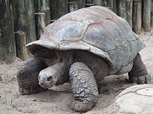 A tortise