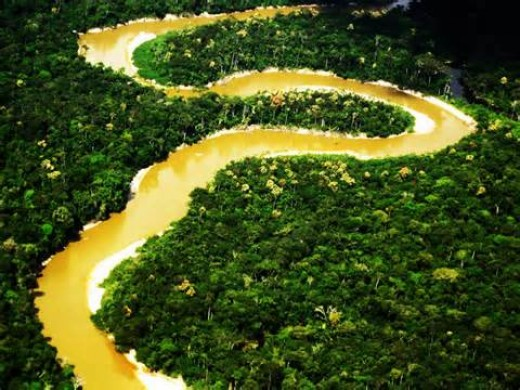 The Amazon River
