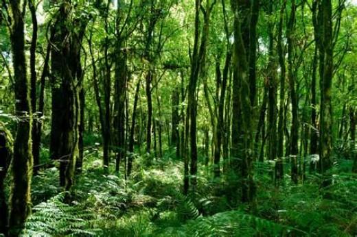Brazilian Rainforest