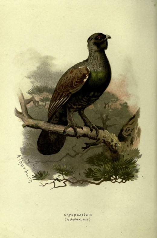 Familiar Wild Birds  -Swaysland 1838