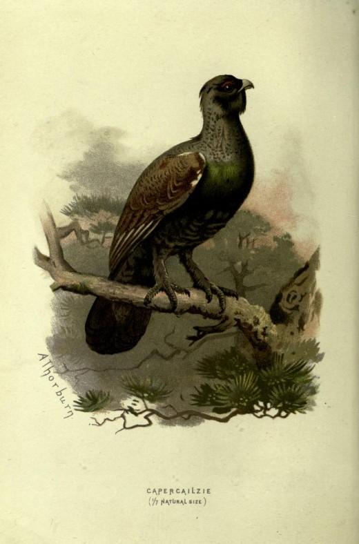 Familiar Wild Birds  -Swaysland 1838