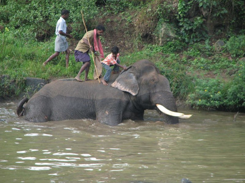Elephant bath at Mudumalai