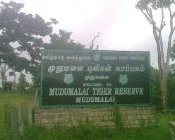 How To Reach Mudumalai Wildlife Sanctuary, Tamil Nadu