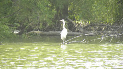 See a Crane at Mills Pond and Wells Branch Austin TX