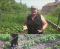 Growing Potatoes How To Hill The Plants