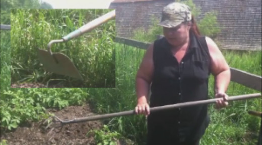 A hoe or a rake will be necessary to pull the loosened soil up around the potato plants.