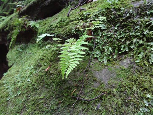 Ferns and lichen coat this rock formation