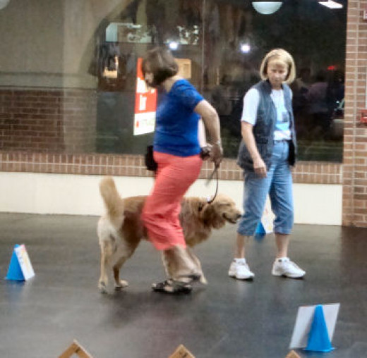 Teaching Rally Obedience at NSDTC.