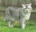 History of Ten Rare Cats