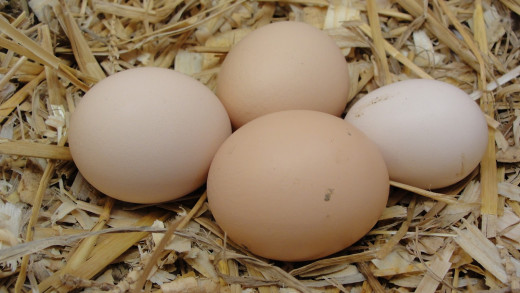 The colour of the eggshell is determined by the breed of chicken - but on the inside they are all the same