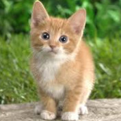 littlecat2013 profile image