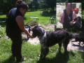 DeShedding Your Dog