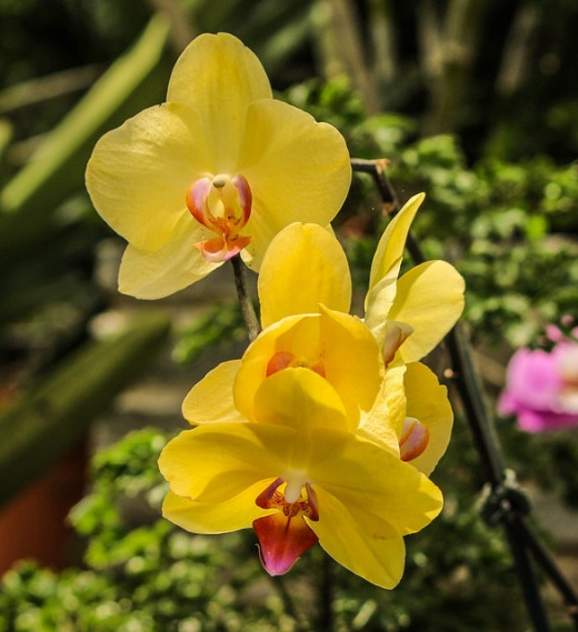 Greenhouses are the ideal place to start off your vegetable seedlings but you can also grow exotic flowering plants such as Orchids which might not survive the weather in the garden.