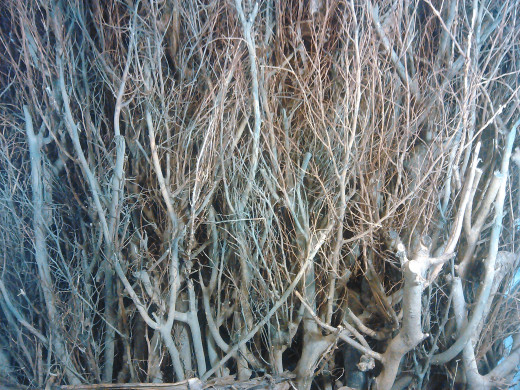 Backdrop made from tree branches