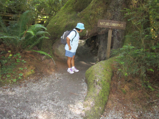 Hiking through the Trees of Mystery in the redwood forest.