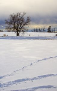 Snow covered ground on a cloudy day