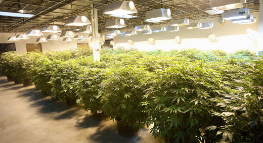 A great Grow Lighting system is essential to ensure healthy cannabis and efficient harvest - What would your business look like if you could lease top of the line cannabis light systems?