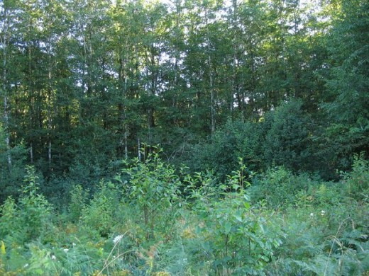 The view from the ground out of one part of Mom's woods across a clear cut and into another part of Mom's woods.