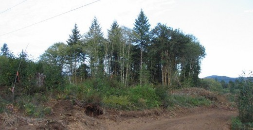 Here is the back 2 acres of Mom's part of the forest, seen from out in one of the clear cuts.