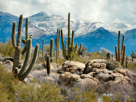 Don't let the cacti grow under your feet - start a routine today!