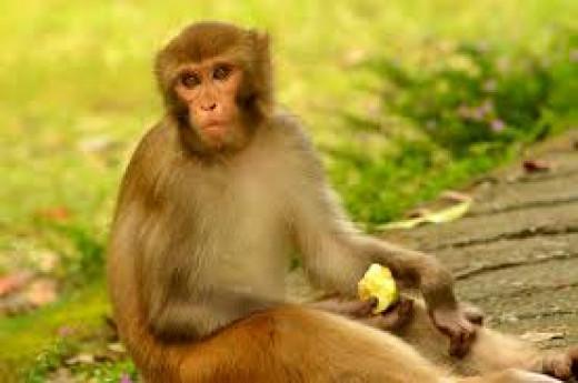 Monkeys Can Make Delightful Pets