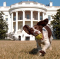 Presidential dog Names from White House