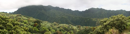 Mountain jungles of Hawaii - one of the smaller lungs of the earth.