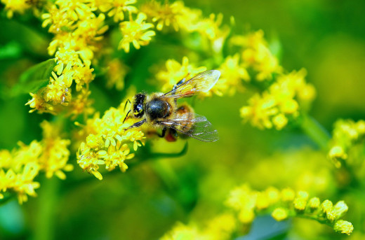 Vegetable plants as well as flowering plants attract bees